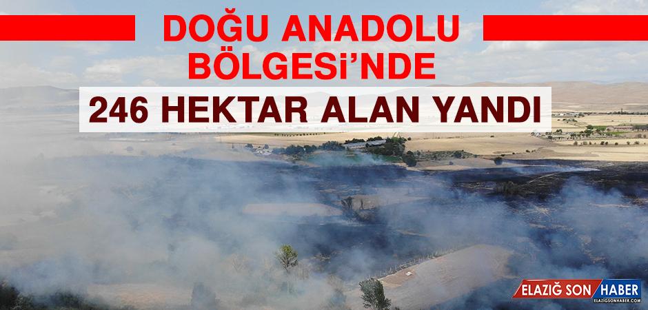 Doğu Anadolu Bölgesi'nde 246 Hektar Alan Yandı