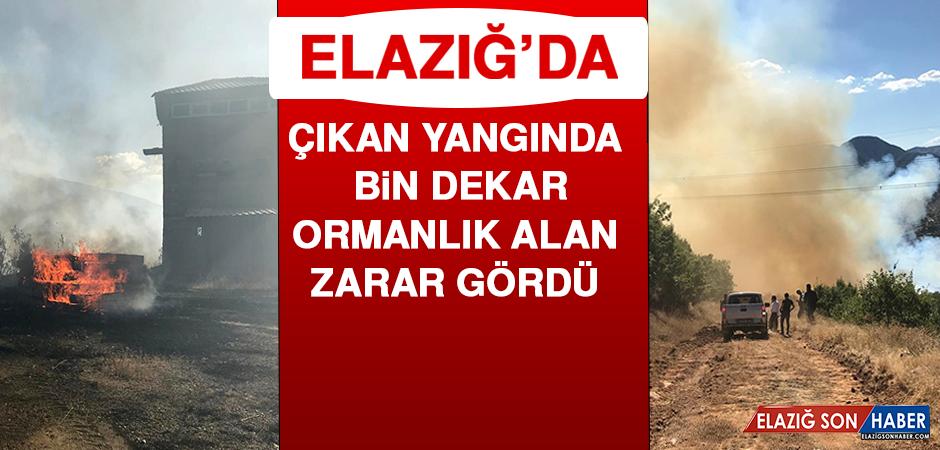 Elazığ'da Çıkan Yangında Bin Dekar Ormanlık Alan Zarar Gördü