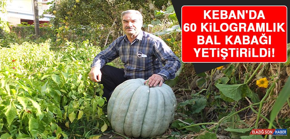 Keban'da 60 Kilogramlık Bal Kabağı Yetiştirildi