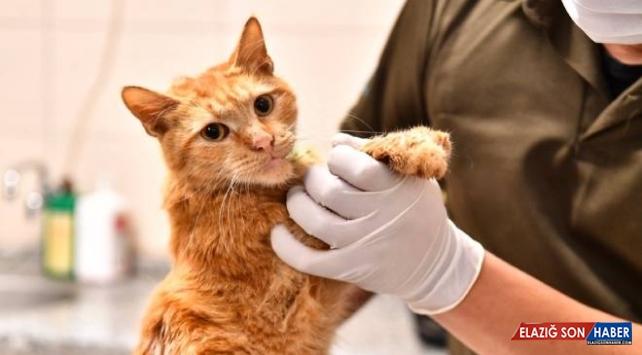 İzmir'de enkazdan kurtarılan 14 kedinin tedavisi sürüyor