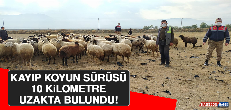 Kayıp Koyun Sürüsü 10 Kilometre Uzakta Bulundu!