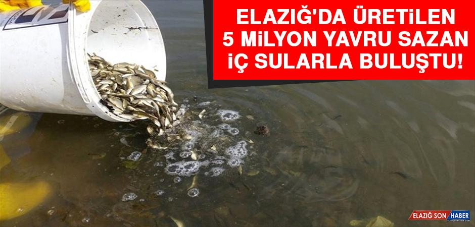 Elazığ'da Üretilen 5 Milyon Yavru Sazan İç Sularla Buluştu