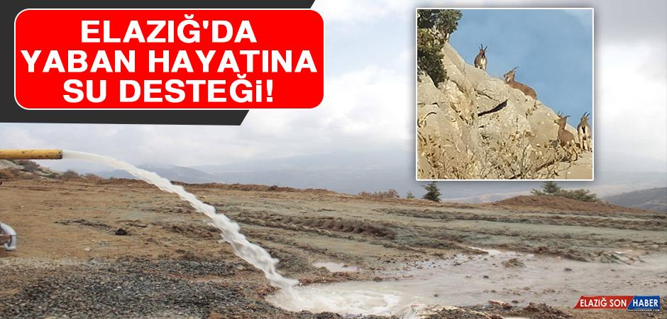 Elazığ'da Yaban Hayatına Su Desteği