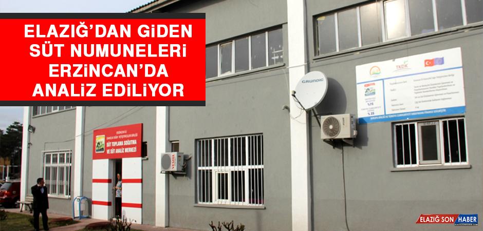 Elazığ'dan Giden Süt Numuneleri Erzincan'da Analiz Ediliyor