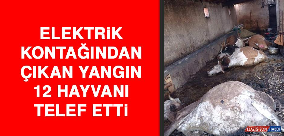 Elektrik Kontağından Çıkan Yangın, 12 Hayvanı Telef Etti