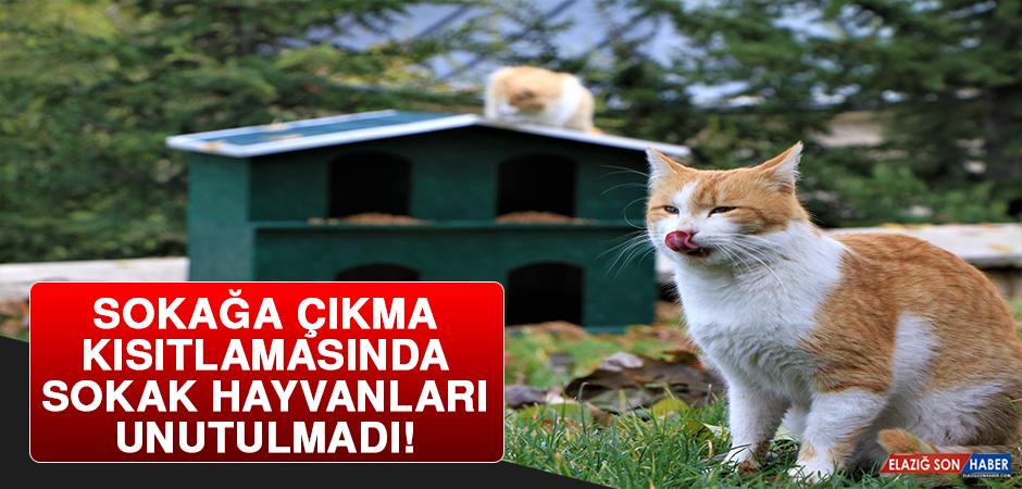 Sokağa Çıkma Kısıtlamasında Sokak Hayvanları Unutulmadı!