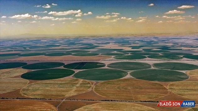 Türkiye'de tarımsal üretimin sigortası: Konya Ovası