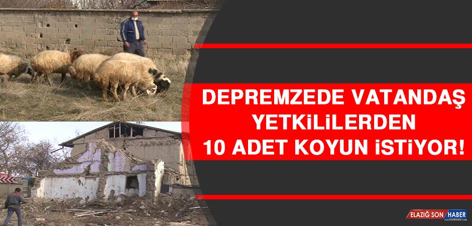 Depremzede Vatandaş, Yetkililerden 10 Adet Koyun İstiyor