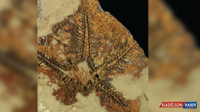 Dünyanın bilinen en eski denizyıldızı keşfedildi