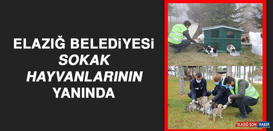 Elazığ Belediyesi, Sokak Hayvanlarının Yanında