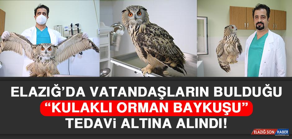 Elazığ'da Vatandaşların Bulduğu 'Kulaklı Orman Baykuşu' Tedavi Altına Alındı!