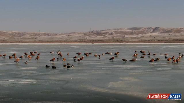 Göller Yöresi'nde en çok sakarmeke, angıt ve çamurcun görüldü