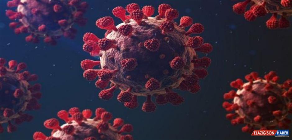 Mutasyonlu Virüse Karşı Aşı Devreye Girebilir
