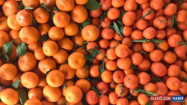 Ocakta turunçgil ihracatından 128 milyon dolar gelir