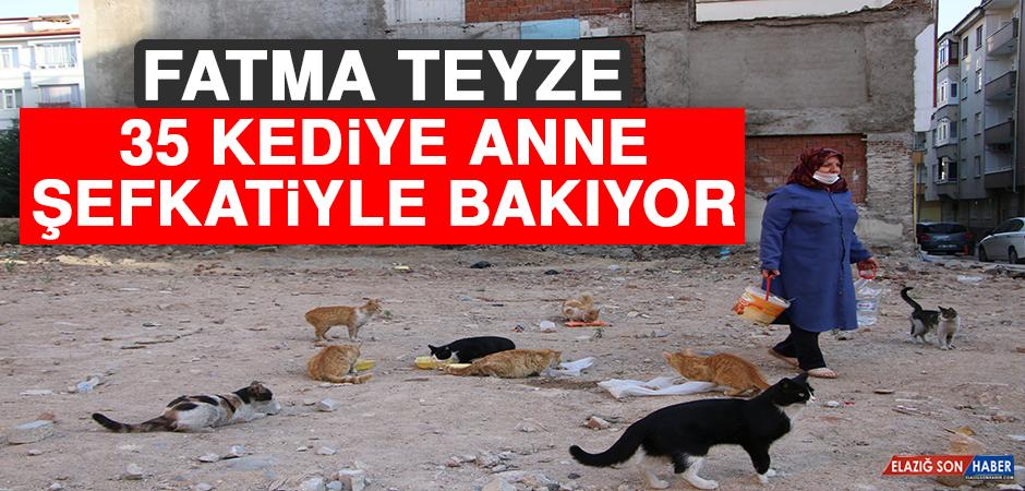 Çocukları Vefat Eden Fatma Teyze, 35 Kediye Anne Şefkatiyle Bakıyor