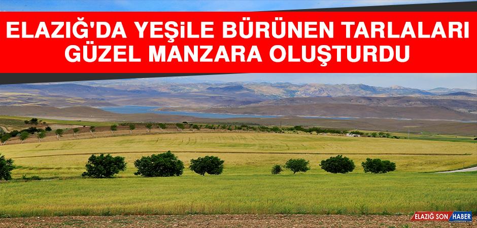 Elazığ'da Yeşile Bürünen Buğday ve Arpa Tarlaları Güzel Manzara Oluşturdu