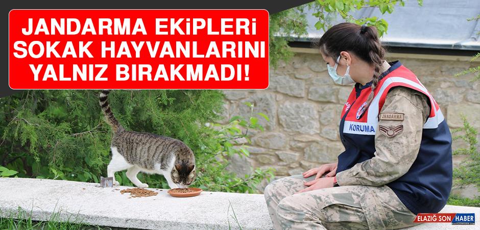 Jandarma Ekipleri Sokak Hayvanlarını Yalnız Bırakmadı