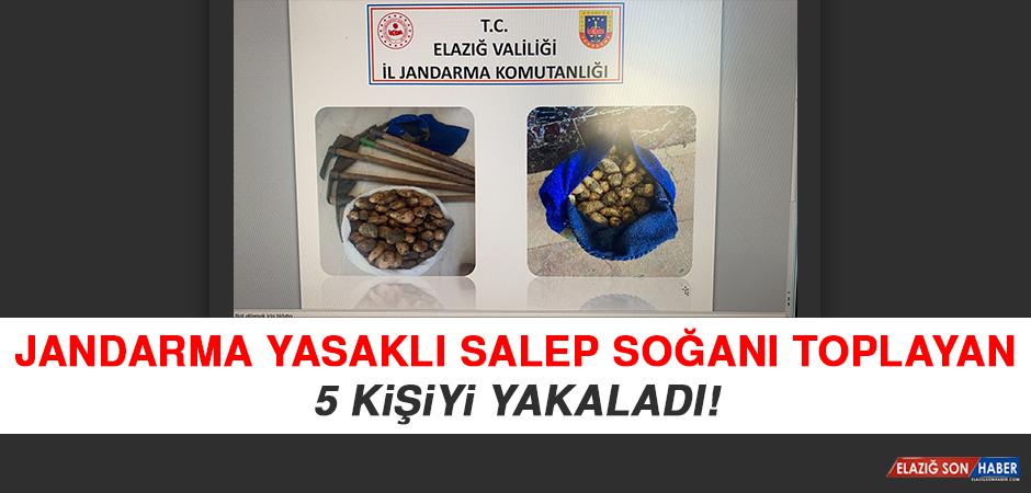 Jandarma Yasaklı Salep Soğanı Toplayan 5 Kişiyi Yakaladı
