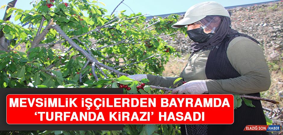 Mevsimlik İşçilerden Bayramda 'Turfanda Kirazı' Hasadı