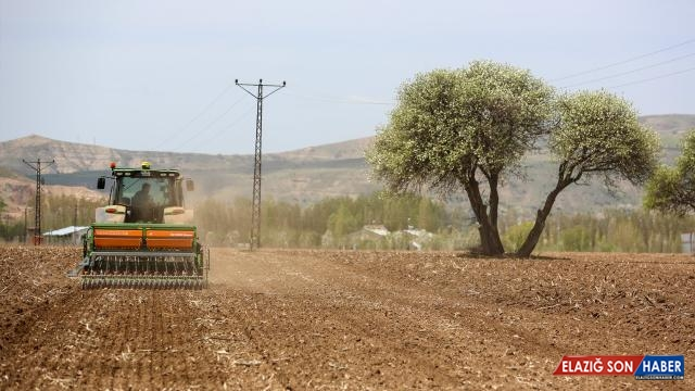 Sivas'ta 170 dekar alanda kenevir ekimi yapıldı