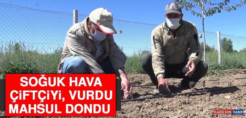 Soğuk Hava Çiftçiyi Vurdu, Mahsul Dondu