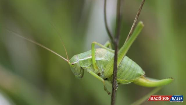 Doğaseverler ODTÜ'de bitki ve hayvan türlerini kayıt altına aldı