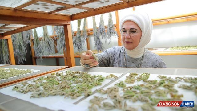Emine Erdoğan'dan Zeytinburnu Tıbbi Bitkiler Bahçesi'ne ziyaret