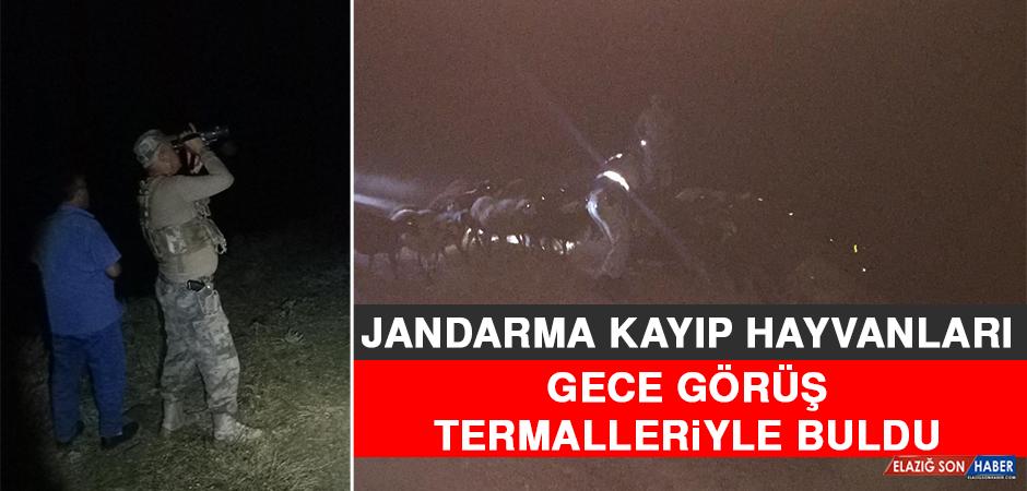 Jandarma Kayıp Hayvanları Gece Görüş Termalleriyle Buldu