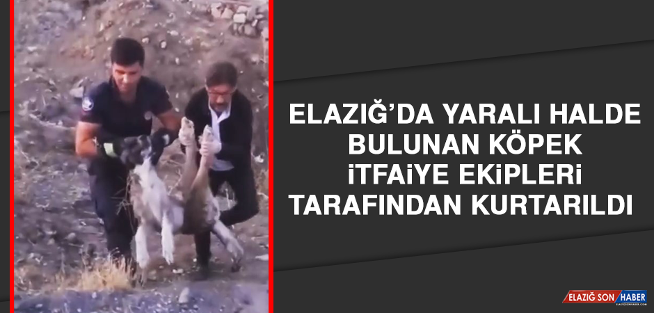 Elazığ'da Yaralı Halde Bulunan Köpek İtfaiye Ekipleri Tarafından Kurtarıldı