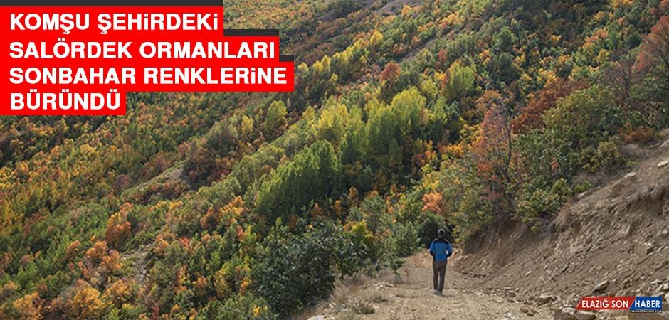 Komşu Şehirdeki Salördek Ormanları Sonbahar Renklerine Büründü