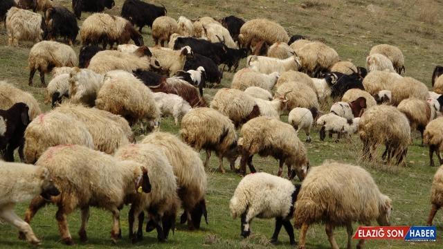 Küçükbaşta sürü büyütme ve çoban istihdamına destek