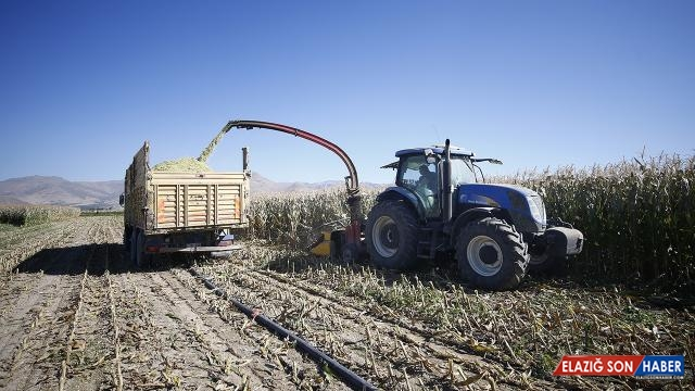 Silajlık mısırın ekim alanları genişliyor