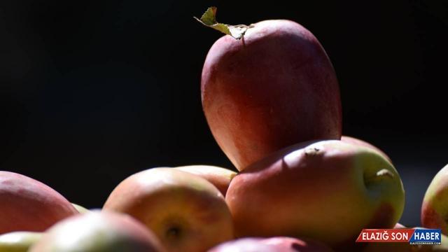 Uzun elmada kuraklığa rağmen verim arttı