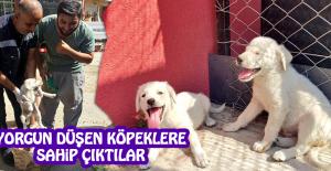 2 Yavru Köpek Koruma Altına Alındı