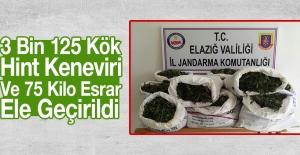 Elazığ'da 3 Bin 125 Kök Hint Keneviri Ve 75 Kilo Esrar Ele Geçirildi