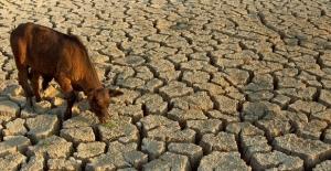 Son 50 Yılda 3 Van Gölü Büyüklüğünde Sulak Alan Kurutuldu