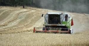 Yağışlar Buğdayda Rekolteyi Yüzde 10 Artırdı