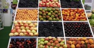 'Meyve Ve Sebzede Ambalaj Uygulaması Fire Oranını Azaltacak'