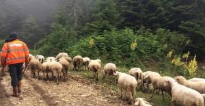 Orman Köylülerine 14,5 Milyar Lira İlave Gelir Sağlandı