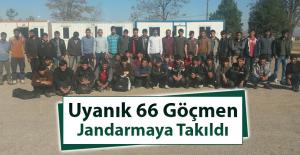 66 Göçmen, Jandarmaya Yakalandı