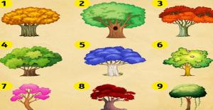 Bir Ağaç Seç ve Yeni Yılın Sana Ne Detireceğini Öğren