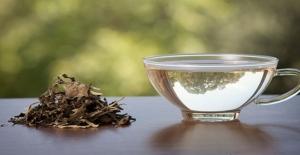 Beyaz Çayın Sağlığa Faydaları Araştırılıyor