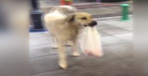 En Sadık Müşteri Olan Sokak Köpeği