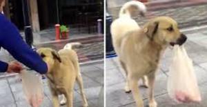 """Kasabın """"En Sadık Müşterisi"""" Sokak Köpeği"""