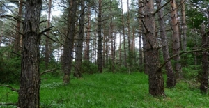 Enerji Sektörü 5 Milyon Ağaç Dikecek