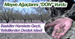 """Meyve Ağaçlarını """"DON"""" Vurdu"""
