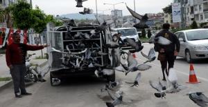 Posta Güvercinleri Birincilik İçin Havalandı