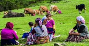 Doğu Karadeniz'de Yeşeren Yaylalara Göç Başladı