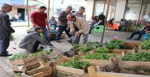 Güroymak'ta Sebze Fideleri Tezgahlarda Yerini Aldı