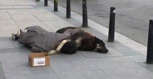 Sosyal Medyanın Konuştuğu Sokak Köpeğine Sarılıp Uyuyan Genç, Dilenci Çıktı